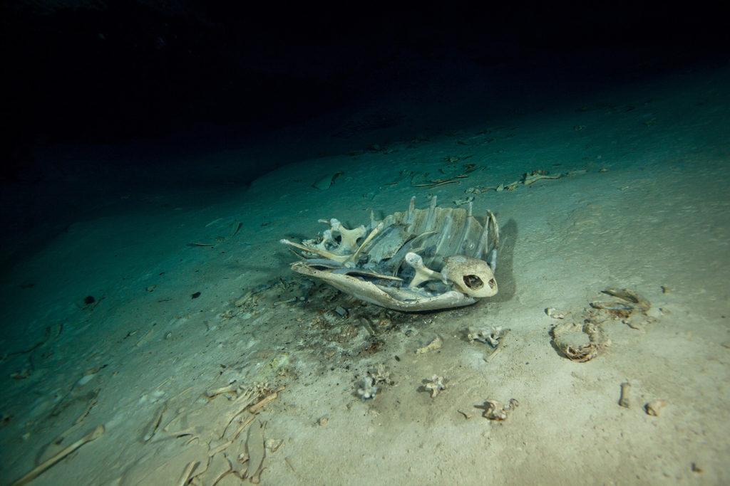 Cave of Sipadan island. Celebes sea. Malaysia.