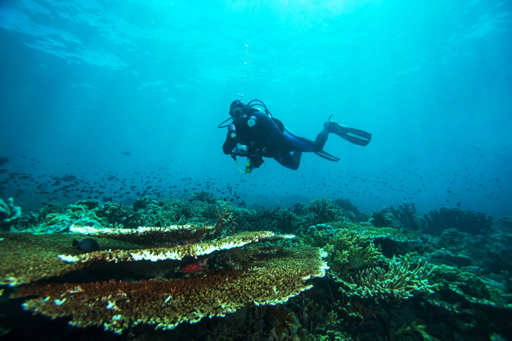 Scuba diver. Sipadan island. Celebes sea. Malaysia.